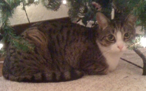 Happy Kitty (Figgy)