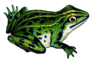 Vintage-Frog-Image-GraphicsFairy3