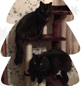 Kitties 2015