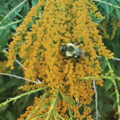 Bee on flower (orange)