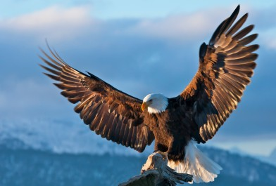 o-BALD-EAGLE-facebook